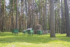 Bijenstal in het hout bijenkorven bijen stock afbeelding