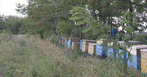 Bijenstal tegen bomen stock videobeelden