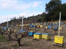 Bijenstal in wijngaard Vroege de lentedag Royalty-vrije Stock Afbeelding