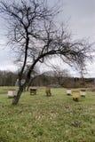 Bijenstalyard met bijenbijenkorven in de herfst stock foto