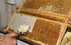 Bijenteelt, die wasdeksels verwijderen uit de honingraten Royalty-vrije Stock Afbeelding