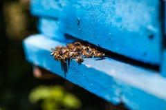 Bijenvlieg aan de bijenkorf Stock Foto