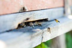 Bijenvlieg aan de bijenkorf Royalty-vrije Stock Fotografie