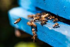 Bijenvlieg aan de bijenkorf Stock Foto's