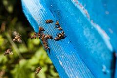 Bijenvlieg aan de bijenkorf Stock Afbeeldingen