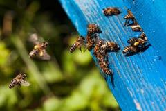 Bijenvlieg aan de bijenkorf Royalty-vrije Stock Afbeeldingen