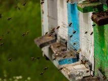 Bijenvlieg aan de bijenkorf Royalty-vrije Stock Foto's
