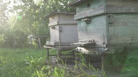 Bijenvlieg aan de bijenkorf Oude retro bijenkorven met bijen stock videobeelden