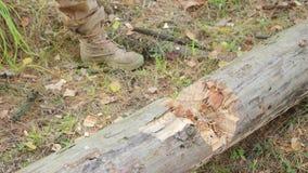Bijlclose-up van een hakkende boom EEN houten spaandersvlieg apart Concept de industrie en bosbouw Vage achtergrond en stock videobeelden