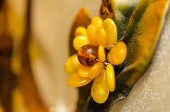 Bijou ambre Image libre de droits