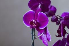 Bijou d'orchidée Image stock