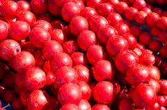Bijou perlé Fond lumineux avec des perles Images stock