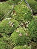 Bijou sur le feuillage vert Photo stock