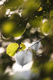 Bijoux de nature Photographie stock libre de droits