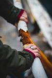 Bijoux pour des mains de fille avec un fond brouillé Photo stock