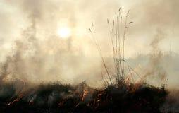 Bijtende dikke rook Royalty-vrije Stock Afbeeldingen