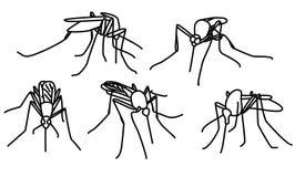 Bijtende muggen Stock Foto