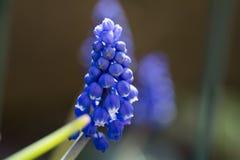 Bijzondere bloem stock afbeeldingen