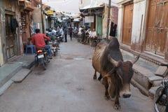 Bikaner, India Stock Images