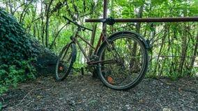 bike старый Стоковая Фотография RF