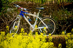 Bike. Riding a bike into the wild in the spring is a pleasant exercise Stock Images