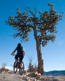 Bike. A bike rider going up a hill next to a tree Stock Photo