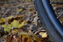 Bike and autumn royalty free stock images