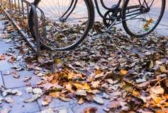 Bike in autumn Stock Photography