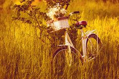 Bike with a basket of flowers Stock Photo