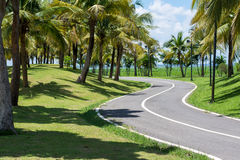 The only bike. Bicycle only A coconut groves along the route Royalty Free Stock Photos