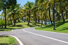 The only bike. Bicycle only A coconut groves along the route Stock Photos