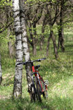 Bike and birch Royalty Free Stock Photo
