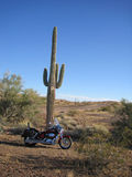 Bike and cactus. Motorcycle tourist taking break in the dessert Royalty Free Stock Images