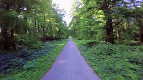 Bike el camino con los árboles grandes, distichum del Taxodium del ciprés calvo en la pequeña ciudad Heviz en Hungría almacen de video
