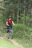 Bike in the forest Royalty Free Stock Image