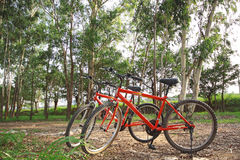 Bike in forest Royalty Free Stock Images