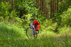 Bike in a forest Stock Photography