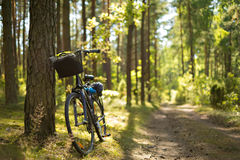 Bike in the forest Stock Photography