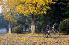 Bike and gingkoes Royalty Free Stock Photos