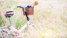 The bike in golden meadow in the afternoon of the summer. Stock Photo