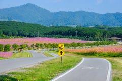 A bike lane for cyclist Royalty Free Stock Photo