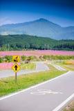 A bike lane for cyclist Stock Photos