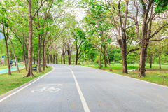 Bike lane in the park. In Bangkok Stock Image