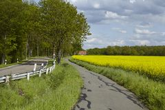 Bike lane with trees and a blossoming, yellow colza field. A bike lane with some trees, a blossoming yellow colza field and a blue sky with white clouds taken at Royalty Free Stock Photos