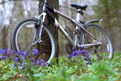 A bicycle is standing by a tree in the forest stock images