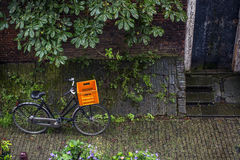 Bike with orange basket is standing on the pavement near the chestnut Stock Photos