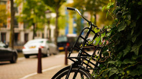 Bike parked against ivy plants. Bike parked against ivy(hedera) plants at a canal street in Amsterdam Royalty Free Stock Photography
