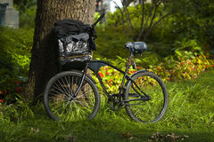 Bike parked against a tree Stock Photo