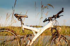 Bike parked in a meadow Royalty Free Stock Images