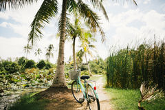 Bike parked under palm tree Royalty Free Stock Image